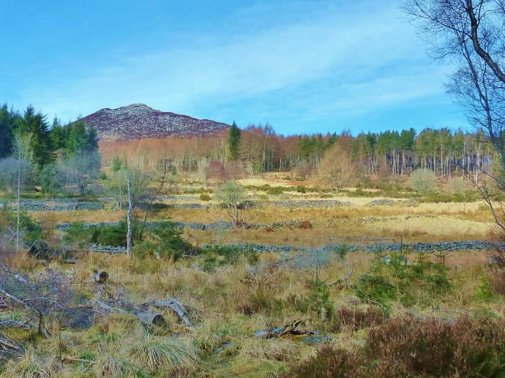 Bennachie Landscapes Project Photo 1.jpg