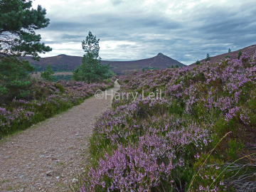 Blooming Bennachie.png