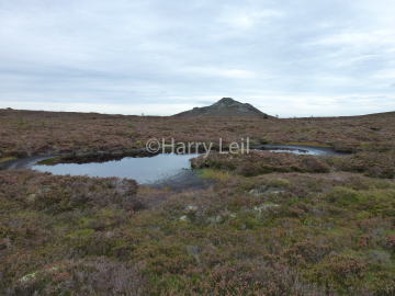 Pond on Bennachie.png